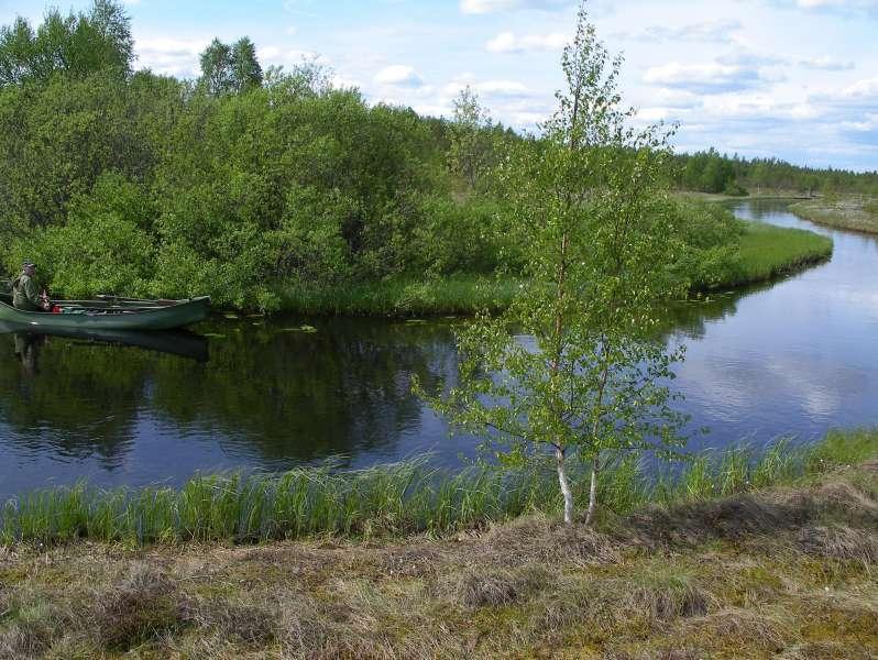 lestijoki