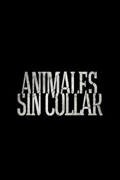 Poster Animales Sin Collar