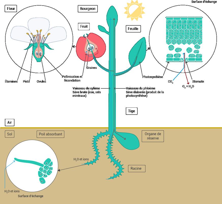 Change de plantes et fleurs id e d 39 image de fleur for Plante 21 svt