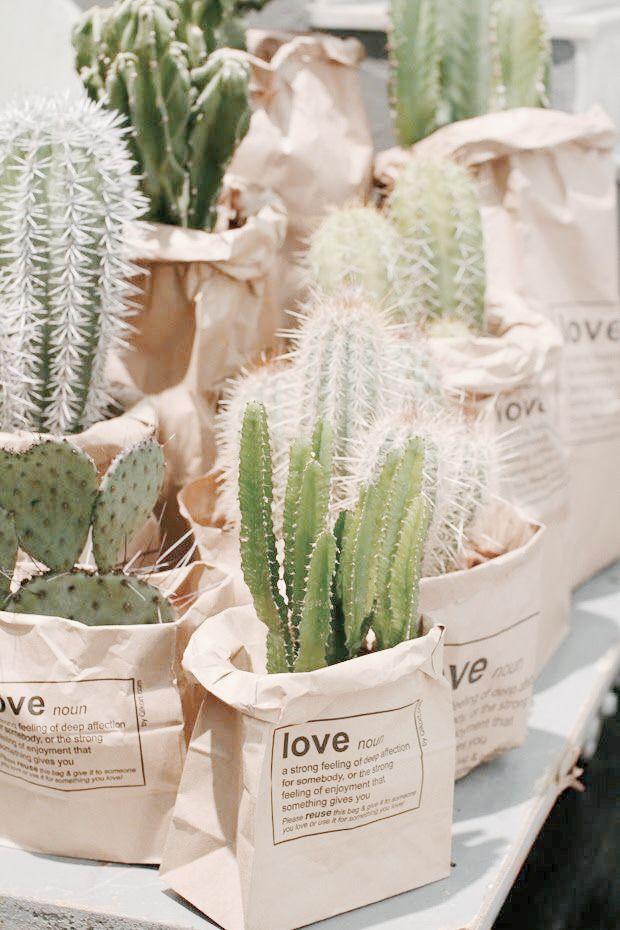 cactus-y-suculentas-3