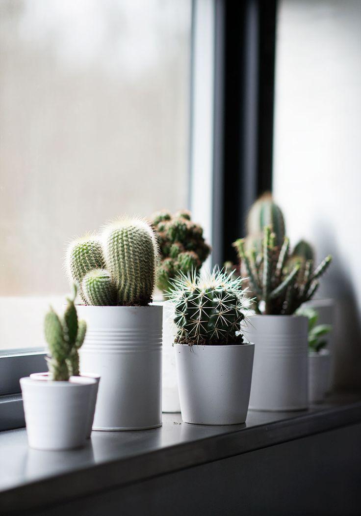cactus-y-suculentas-8