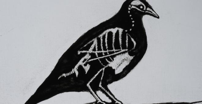 2721-crow_2