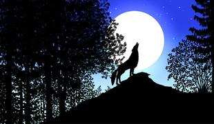 918-contes_de_la_nuit_les_-loup-2_1_