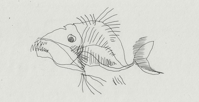 2148-strangefishstill01