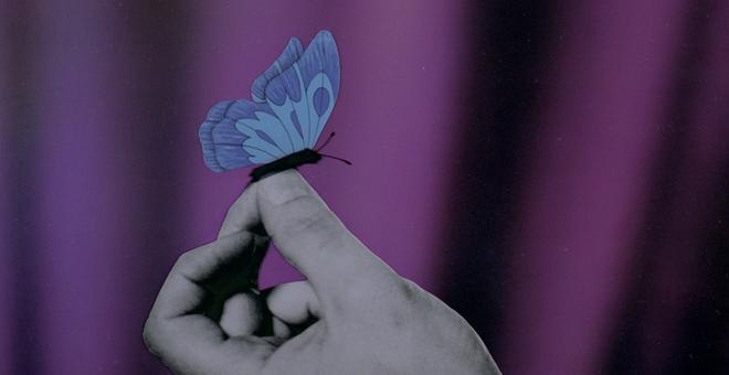 2559-nocturnal_butterflies_5