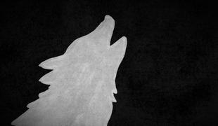 530-wolves_1
