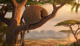 1150-rollin_safari_1