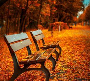 bench-560435-kopie