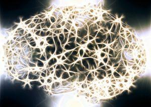 neurony_mozek
