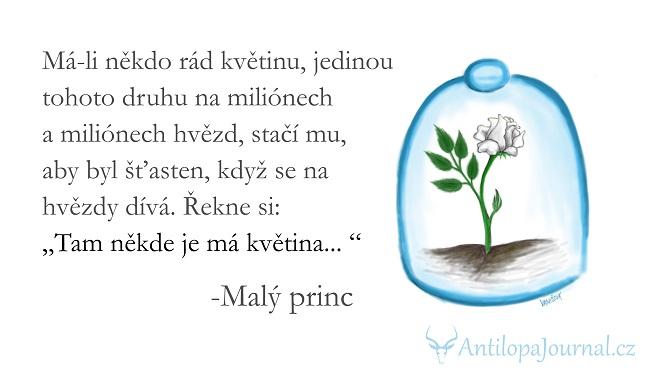 Výsledek obrázku pro citáty z knih malý princ
