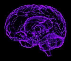 brain-1787622_px-kopie