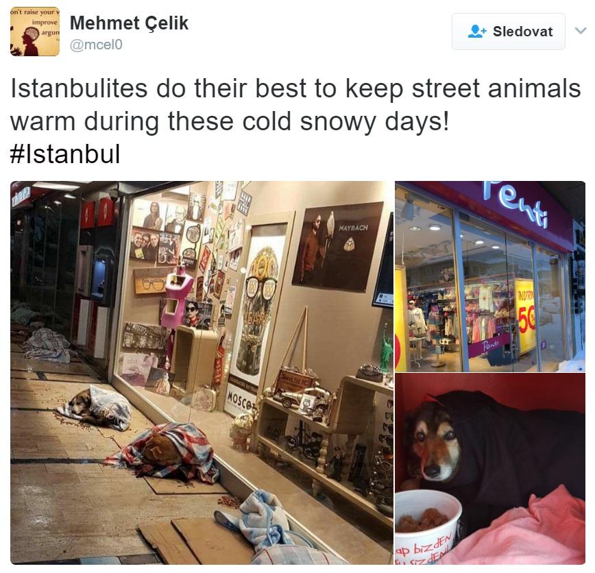 opuštěná zvířata_Istanbul