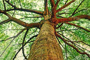 muž_ktery_sazel_stromy