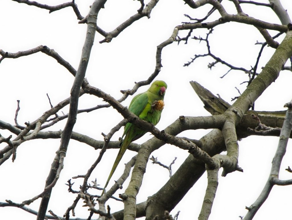 green parrot in istanbul
