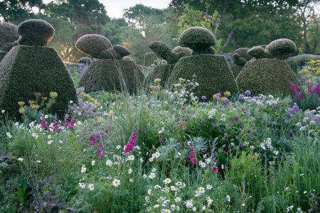 The Peacock Garden by Carol Casselden