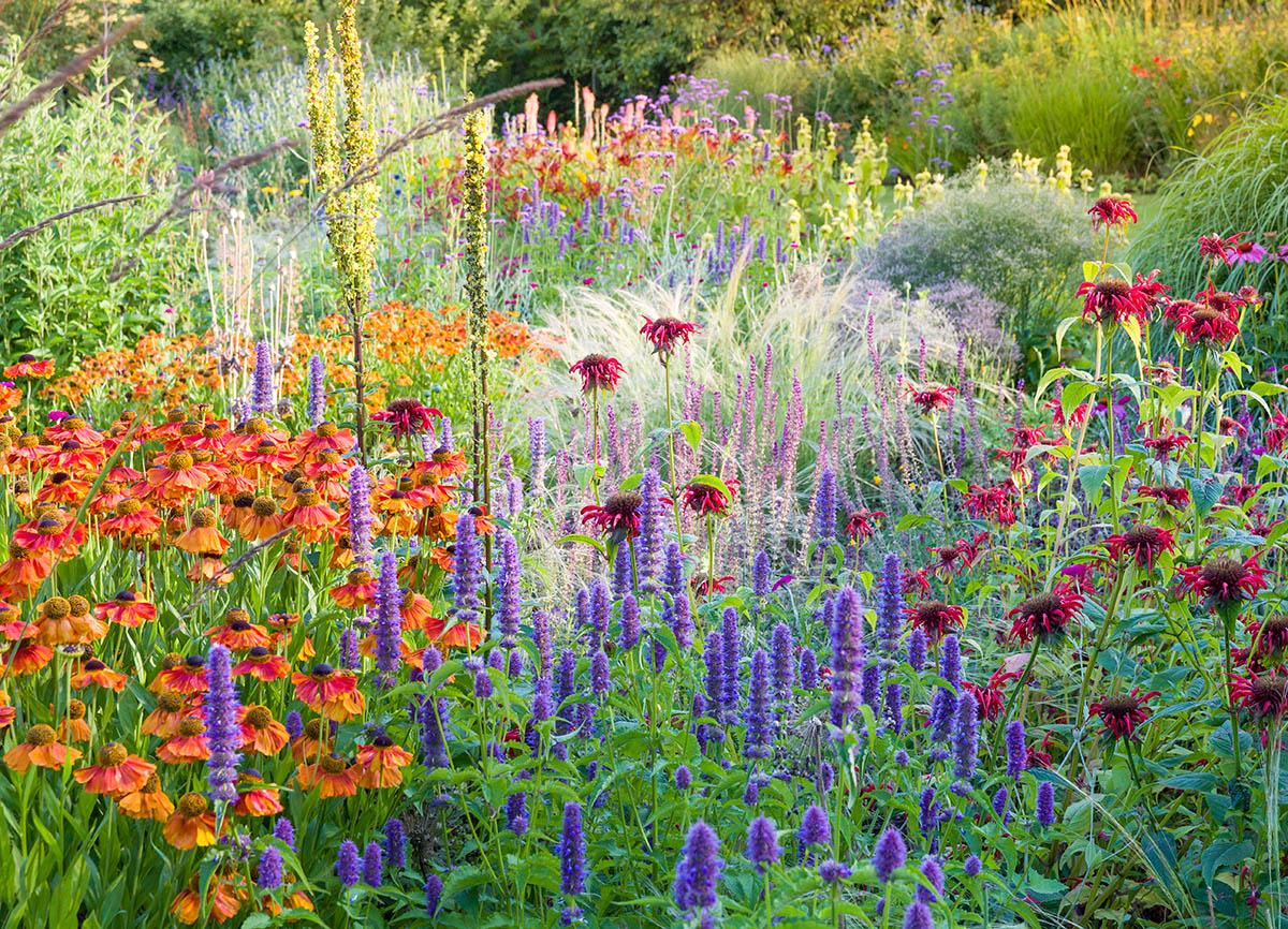 http://s3-eu-west-1.amazonaws.com/bakedvanilla/20180207170955/Bluebell-Cottage-Gardens-High-Summer-Border-by-Joe-Wainwright-158578.jpg