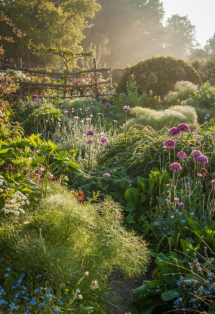 Through the Garden by Nicky Flint