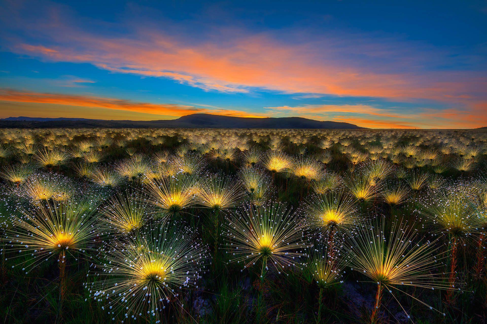 Cerrado Sunrise, the Winner of the International Garden Photographer of the Year Competition 11