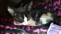 Misaki, mi gato desconocida hembra, tiene estreñimiento y vómito
