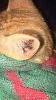 Whiskas, mi gato desconocida hembra, tiene un problema de salud