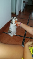 Tengo dudas sobre el comportamiento de Orelletes, mi mascota desconocida macho