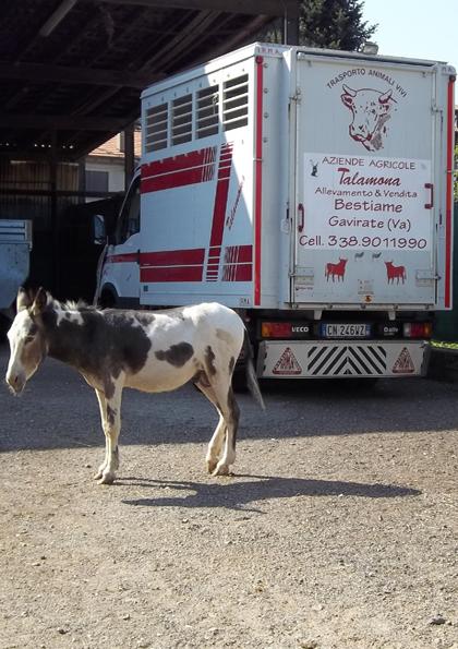 Corso per Guardiani e Conducenti del Trasporto di Animali Vivi