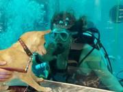 la subacquea attira tutti!