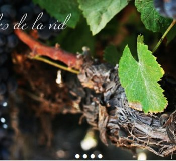 VinosdeTegueste: los vinos de la Villa