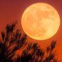 Diálogos con la luna