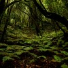 'Los bosques son'