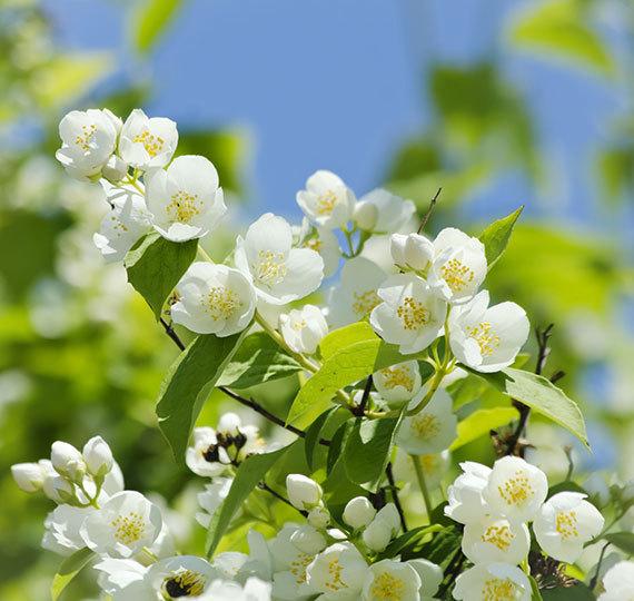 hidrolatos florales