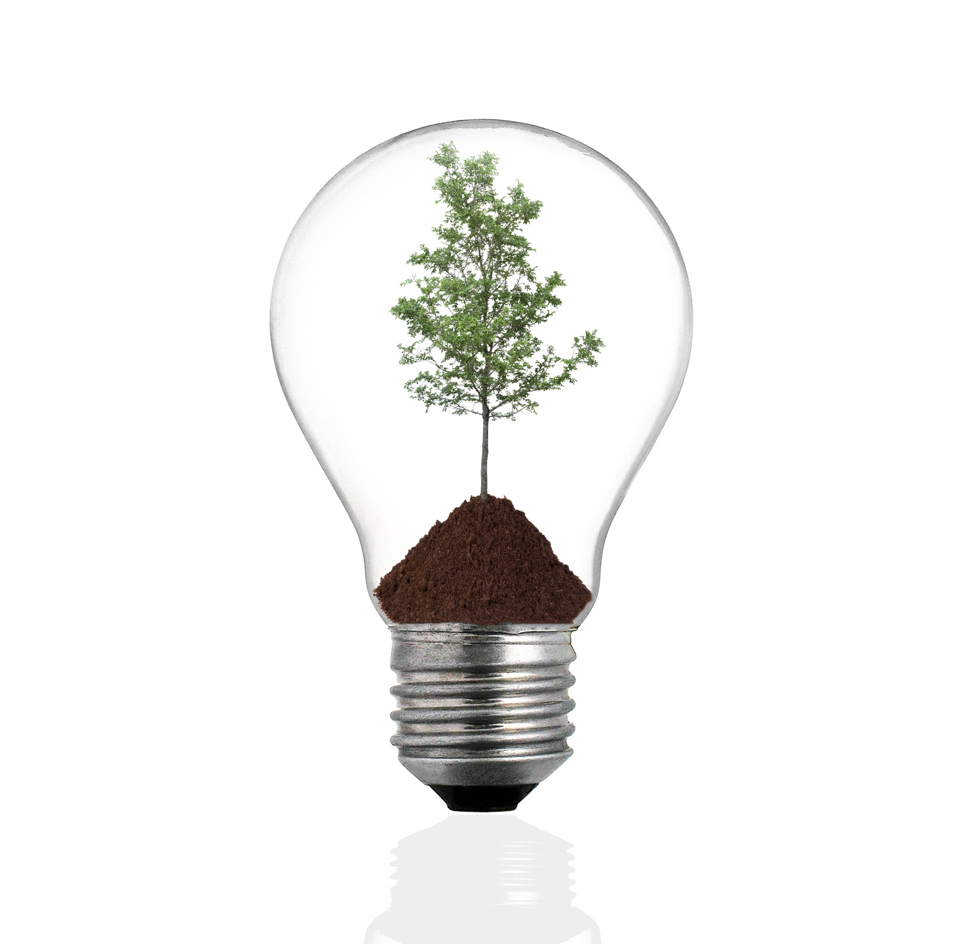 bulb-light-with-tree