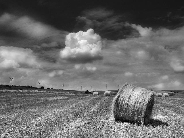 contrasto in foto in bianco e nero