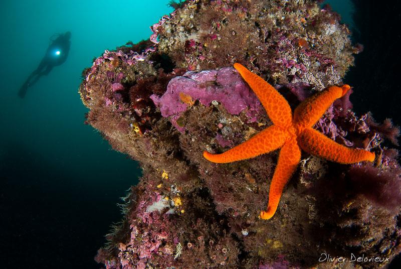 consigli per scattare foto subacquee