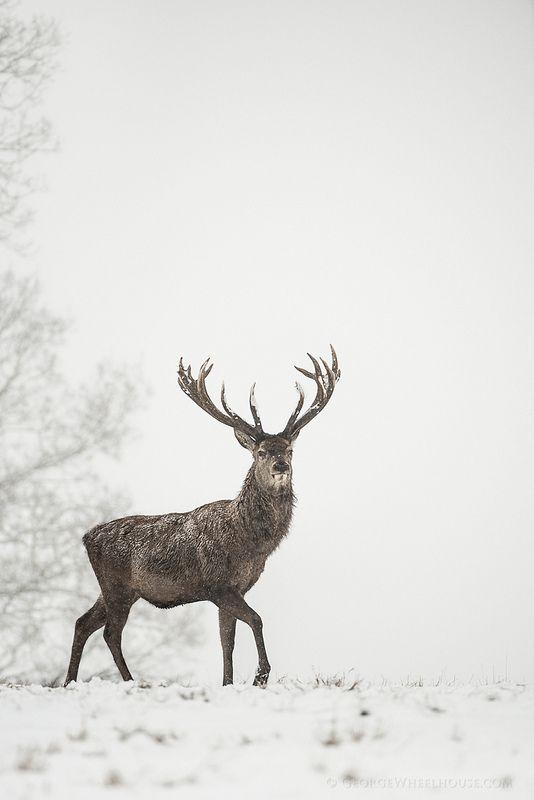come fotografare la neve
