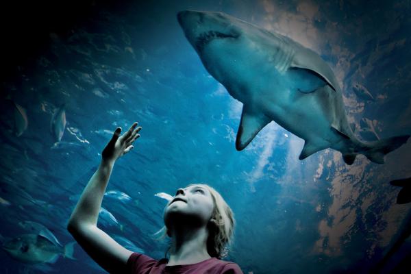 NMA shark