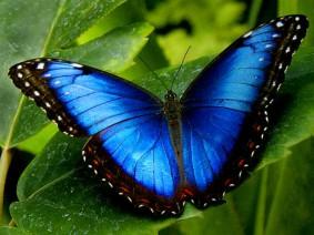 Dagtocht Vlindertuin Vlindorado en Schoorl