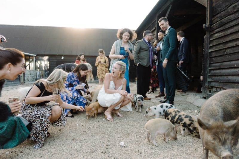 bride and wedding guests surrounded by piglets at a wedding