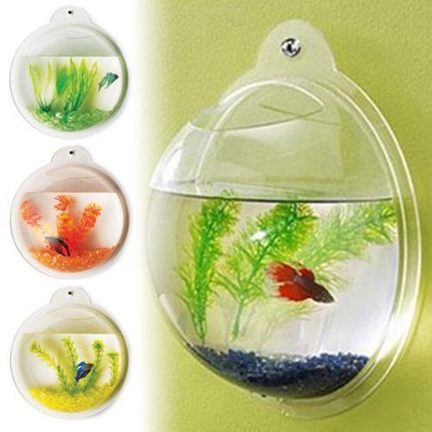 Acrylic wall mount fish tank for Acrylic fish bowl
