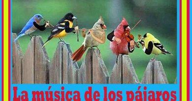 La música de los pájaros. Por Mariano González Balseiro