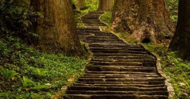 Sobre el camino a la verdad en el jardín seco de Rick Deckard