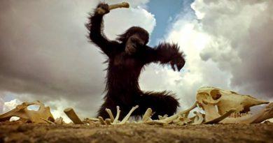 La piedra y el primate. Por Roberto Granda