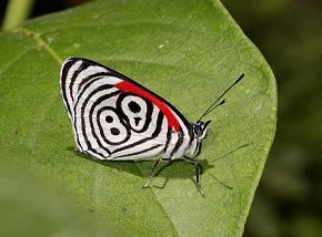 Butterflya