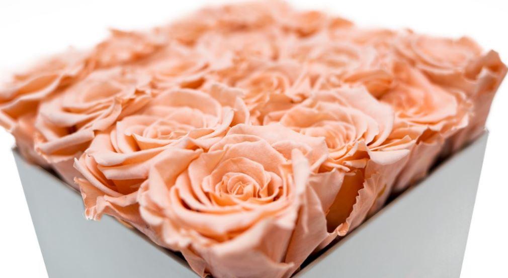 Roses.JPG#asset:3463