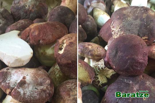 Disfruta del auténtico sabor de los hongos nacionales con 1 kilo de Baratze a recger directamente en tienda ¡Calidad excepcional!