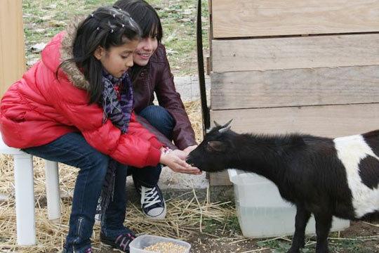 Disfruta de un día de granja con paseo en burro o excursión para niños o familias ¡Aprende de los animales y la naturaleza!