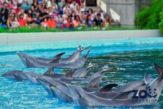 Pasa un día increíble visitando el fantástico Zoo Aquarium donde encontrarás animales de mar y tierra de muy diversas especies ¡Con exhibiciones y espectáculos!