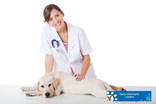 Esterilización o castración de tu perro o gato en Veterinaria Landeta de Getxo ¡Tu mascota en las mejores manos!