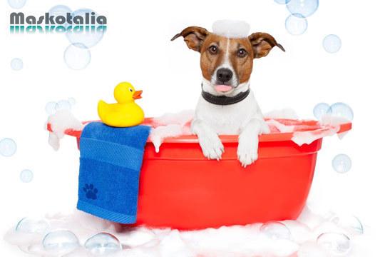 ¡Cuidados para tu mascota! Lavado + Corte de pelo (opcional) + Cepillado + Limpieza de oídos + Corte de uñas + Desparasitación externa