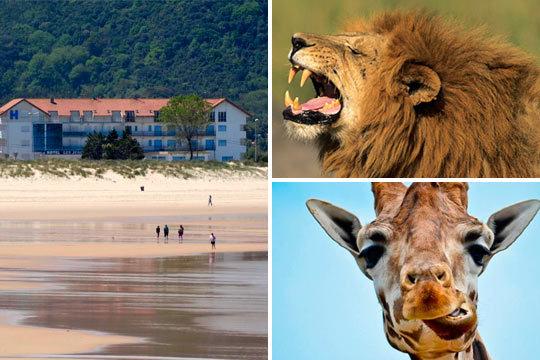 En septiembre disfruta de un plan muy completo con 2 noches en un hotel en Cantabria + entrada de día completo a Cabárceno ¡Descubre paisajes increíbles!